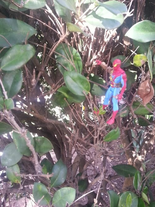 Spider-Man in the bushes