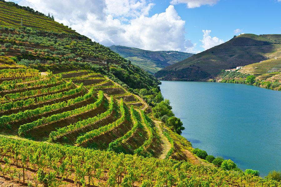 Valley of the River Douro Portugal