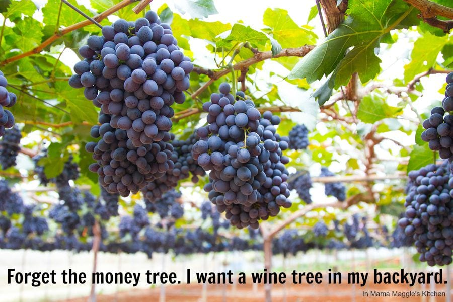 Forget the money tree. I want a wine tree in my backyard. -In Mama Maggie's Kitchen