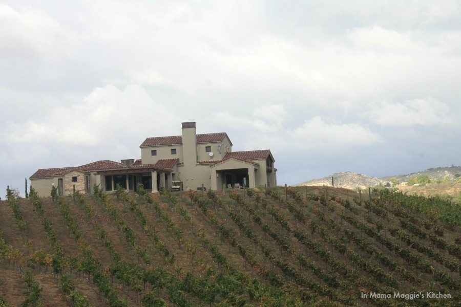 Vineyard in Temecula Valley | In Mama Maggie's Kitchen