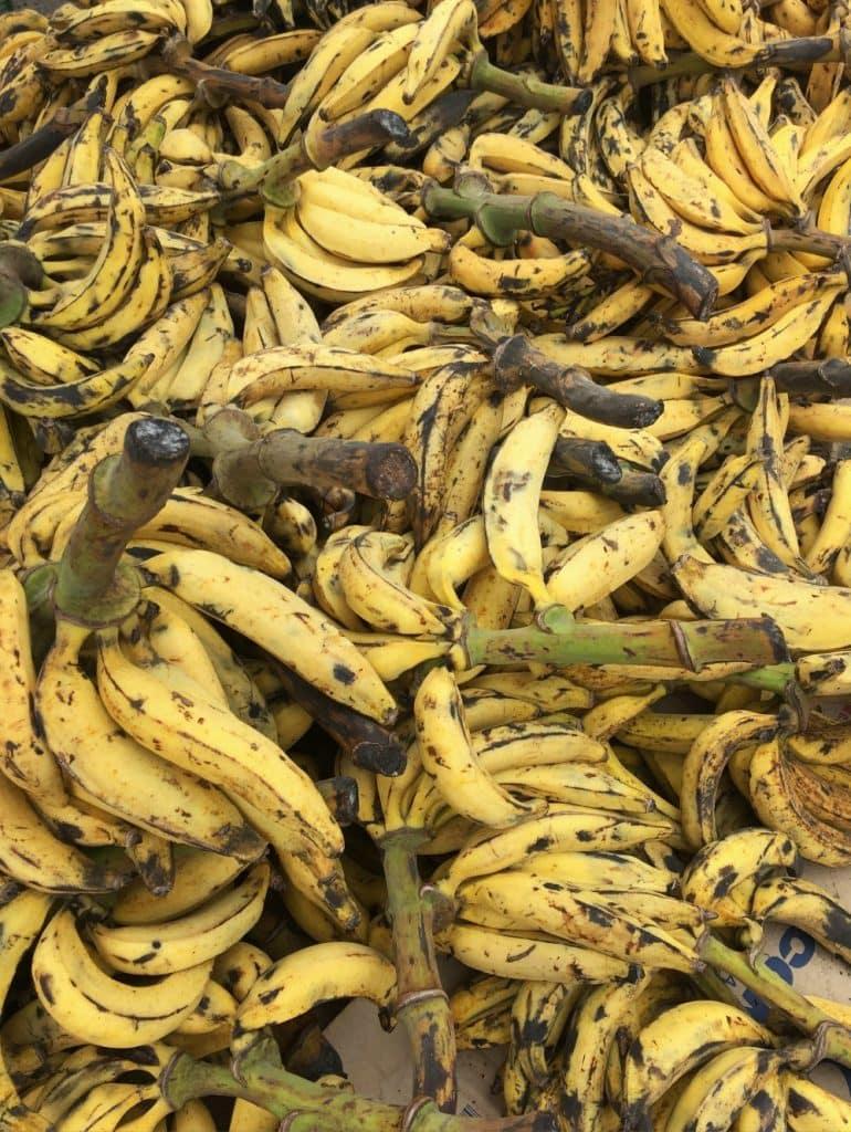 Bananas from Tabasco, Mexico