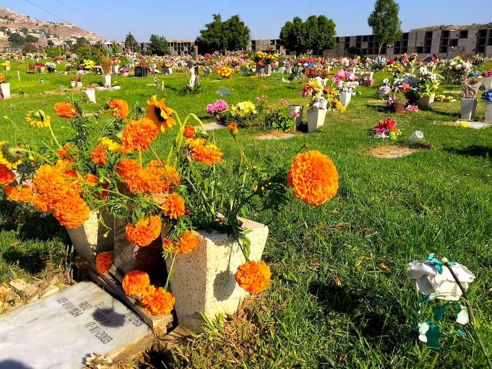 A bouquet of marigolds in a cemetery in Tijuana, Mexico.