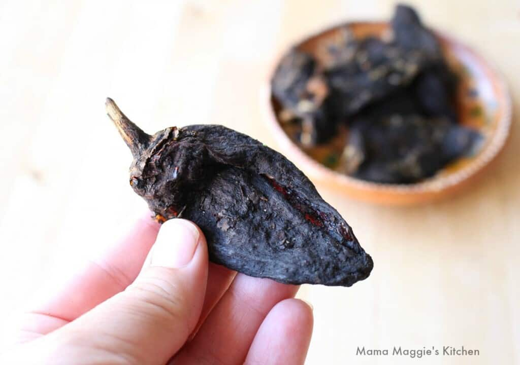 A hand holding a dried chile pasado.