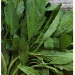 A picture of green epazote leaves.